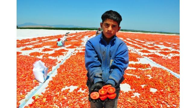Kurutulmuş domatesler Manisa'dan