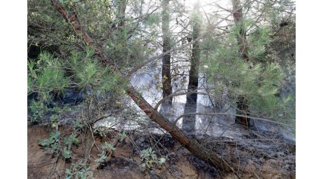 Alaşehir'de orman yangını